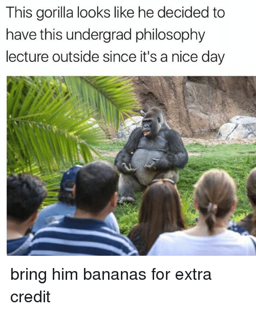 This gorilla looks like he decided to have this undergrad philosophy memes philosophy and nice this gorilla looks like he decided to have this altavistaventures Choice Image