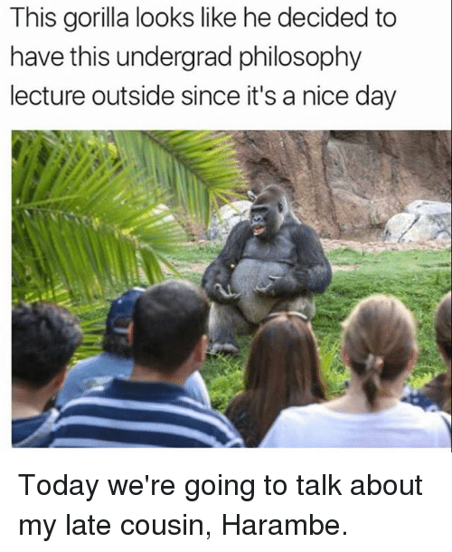Funny, Philosophy, and Today: This gorilla looks like he decided to  have this undergrad philosophy  lecture outside since it's a nice day Today we're going to talk about my late cousin, Harambe.