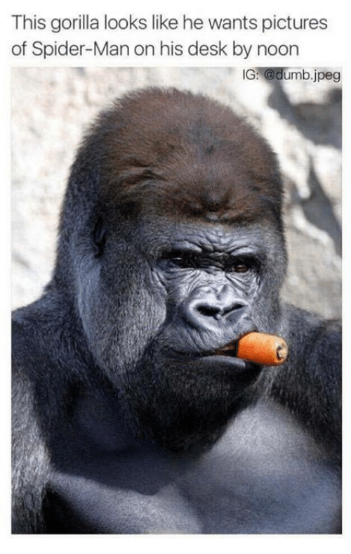 this gorilla looks like he wants pictures of spider man on his desk
