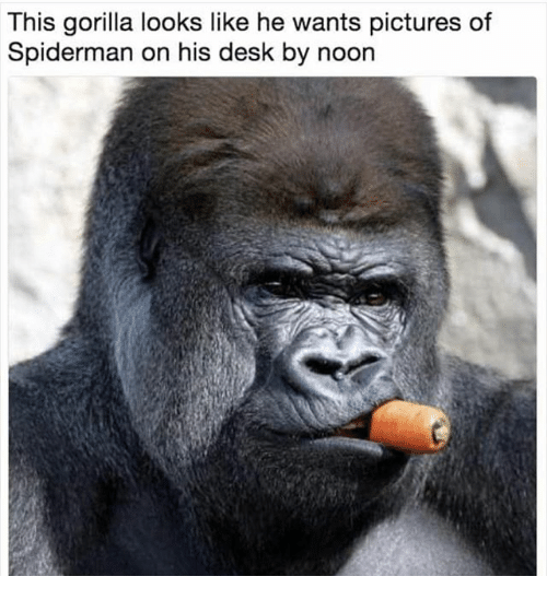 Memes, Desk, and Pictures: This gorilla looks like he wants pictures of  Spiderman on his desk by noon