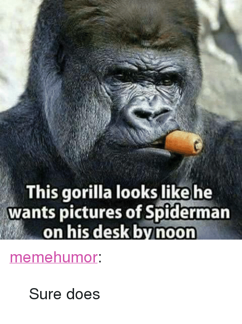"Tumblr, Blog, and Desk: This gorilla looks like he  wants pictures of Spiderman  on his desk by noon <p><a href=""http://memehumor.net/post/168095555989/sure-does"" class=""tumblr_blog"">memehumor</a>:</p>  <blockquote><p>Sure does</p></blockquote>"