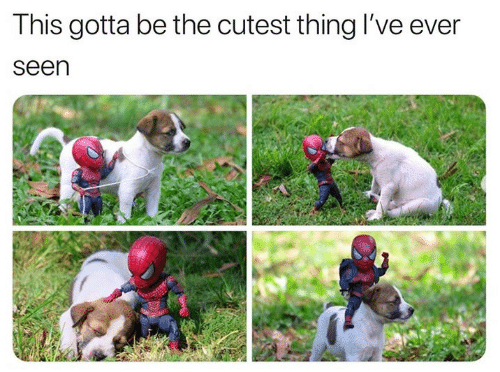 Thing, This, and Cutest: This gotta be the cutest thing I've ever  seen