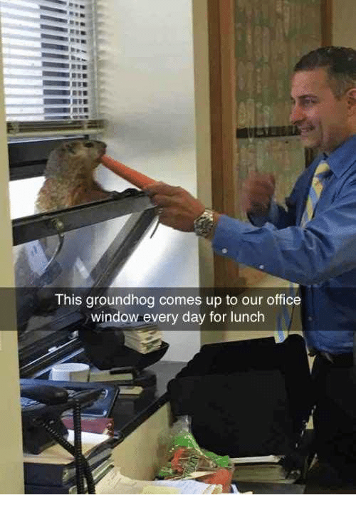 Dank, 🤖, and Groundhog: This groundhog comes up to our office  window every day for lunch