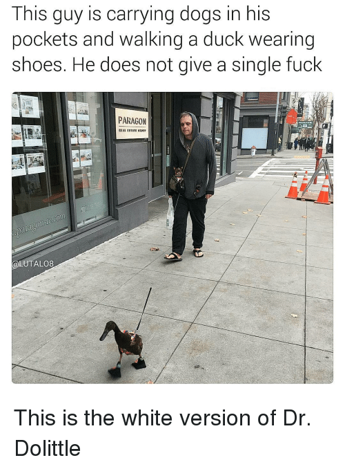 Memes, 🤖, and Paragon: This guy is carrying dogs in his  pockets and walking a duck wearing  Shoes. He does not give a Single fuck  PARAGON  @LUTALO8 This is the white version of Dr. Dolittle