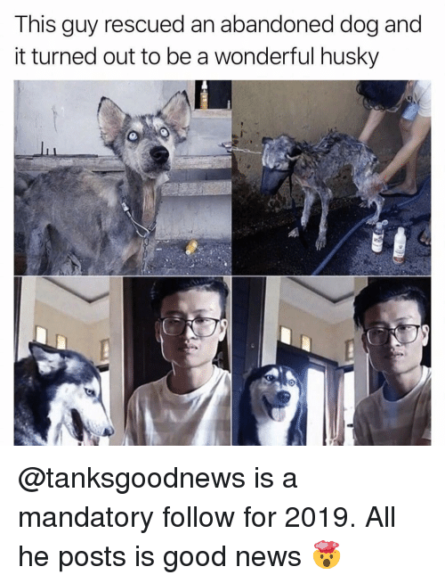 Memes, News, and Good: This guy rescued an abandoned dog and  it turned out to be a wonderful husky @tanksgoodnews is a mandatory follow for 2019. All he posts is good news 🤯