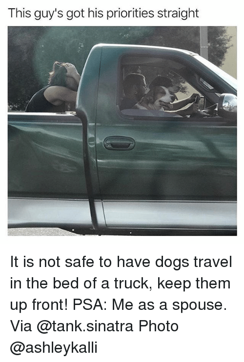 Dogs, Memes, and Travel: This guy's got his priorities straight It is not safe to have dogs travel in the bed of a truck, keep them up front! PSA: Me as a spouse. Via @tank.sinatra Photo @ashleykalli