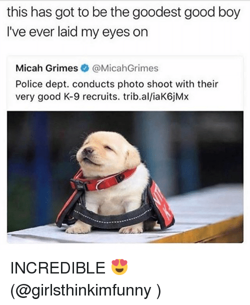 Memes, Police, and Good: this has got to be the goodest good boy  I've ever laid my eyes on  Micah Grimes@MicahGrimes  Police dept. conducts photo shoot with their  very good K-9 recruits. trib.al/iaK6jMx INCREDIBLE 😍 (@girlsthinkimfunny )