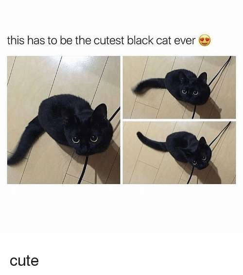 this has to be the cutest black cat ever cute 13044972 ✅ 25 best memes about black cat black cat memes