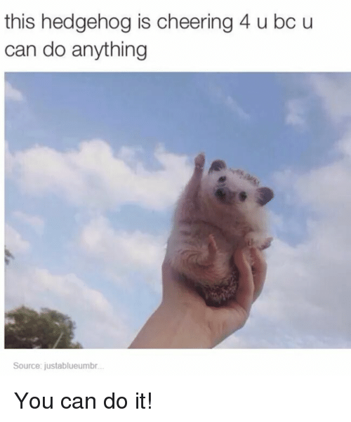 Buy Porta Potty >> This Hedgehog Is Cheering 4 U Bc U Can Do Anything Source ...