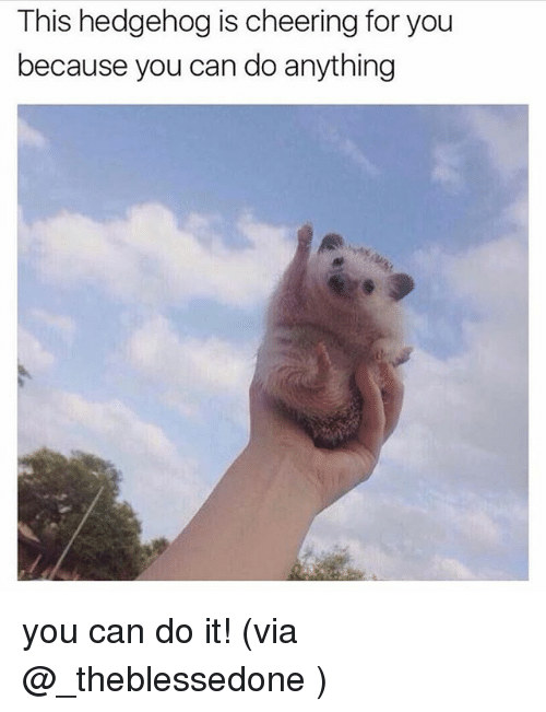 Memes, Hedgehog, and 🤖: This hedgehog is cheering for you  because you can do anything you can do it! (via @_theblessedone )