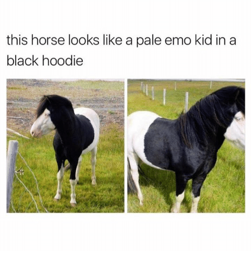 Dank, 🤖, and Kid: this horse looks like a pale emo kid in a  black hoodie