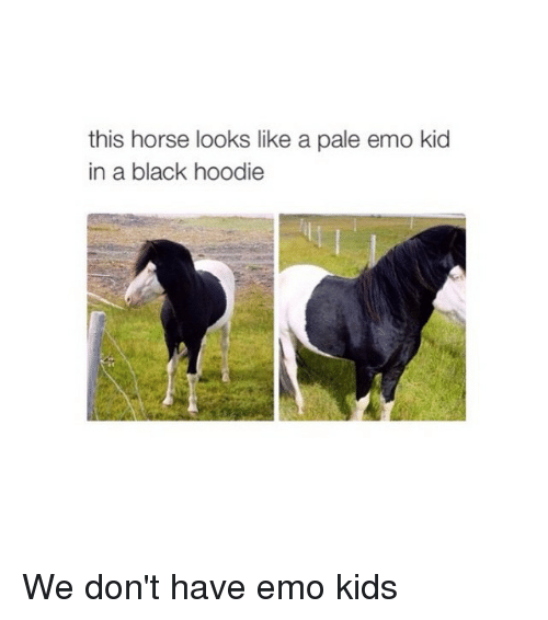 Emo, Horses, and Black: this horse looks like a pale emo kid  in a black hoodie We don't have emo kids