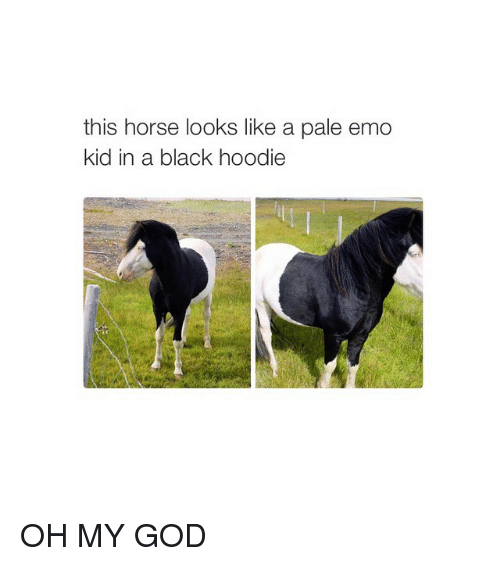 Emo, God, and Horses: this horse looks like a pale emo  kid in a black hoodie OH MY GOD
