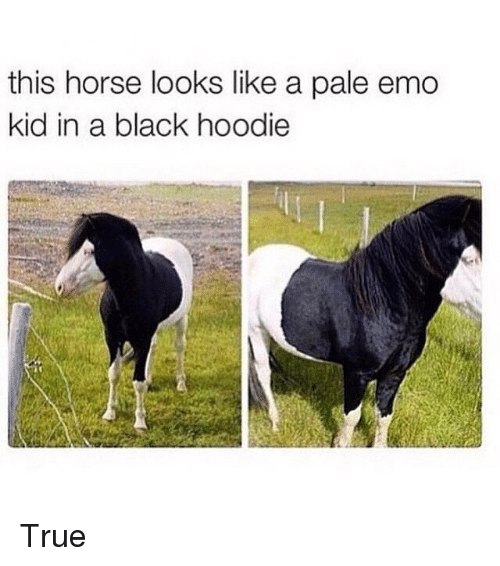Emo, Horses, and True: this horse looks like a pale emo  kid in a black hoodie True