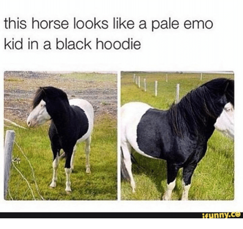 Emo, Horses, and Horse: this horse looks like a pale emo  kid in a black hoodie  efunny.C
