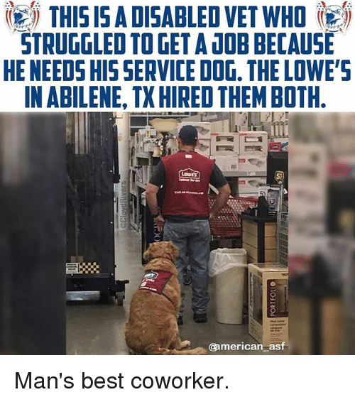 Memes, American, and Best: THIS I5 ADISABLED VET WHO  STRUGGLED TO GET A DOB BECAUSE  HE NEEDS HIS SERVICE DOG. THE LOWE'S  IN ABILENE, TX HIRED THEM BOTH  @american asf Man's best coworker.