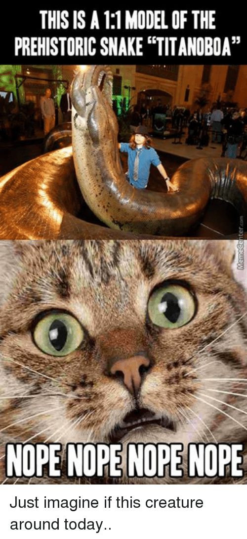 """Memes, Today, and Nope: THIS IS A 1:1MODEL OF THE  PREHISTORICSNAKE """"TITANOBOA""""  NOPE NOPE NOPE NOPE Just imagine if this creature around today.."""