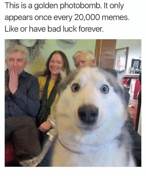 Bad, Memes, and Photobomb: This is a golden photobomb. It only  appears once every 20,000 memes  Like or have bad luck forever.