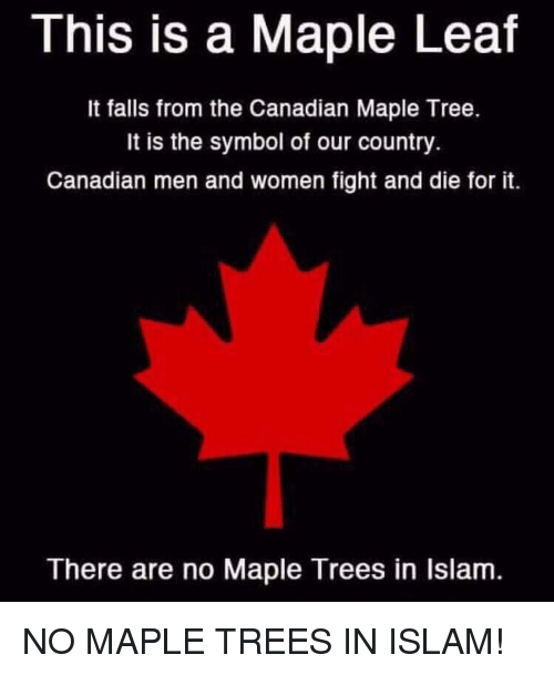 This Is A Maple Leaf It Falls From The Canadian Maple Tree It Is The