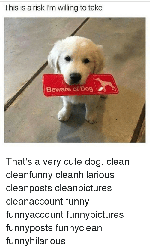 Funny clean dog memes - photo#34
