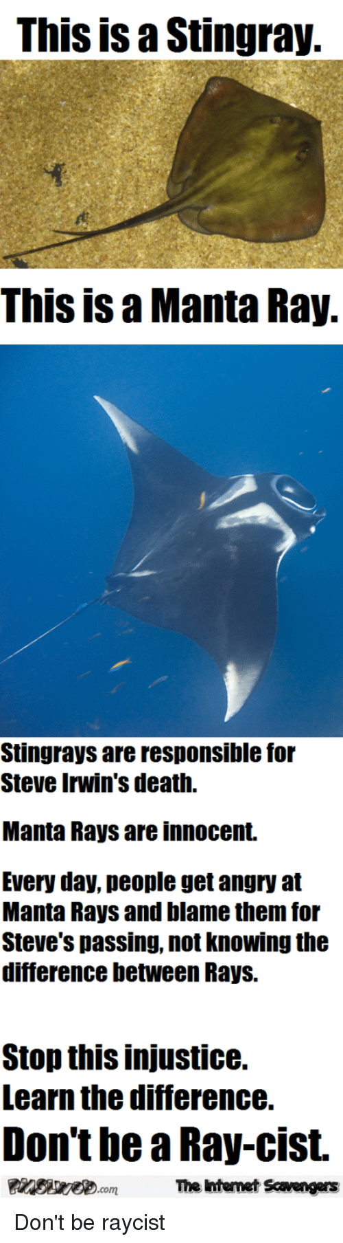 Death, Angry, and Ray: This is a Stingray  This is a Manta Ray.  Stingrays are responsible for  Steve Irwin's death.  Manta Rays are innocent  Every day, people get angry at  Manta Rays and blame them for  Steve's passing, not knowing the  difference between Rays.  Stop this injustice.  Learn the difference.  Don't be a Ray-cist.  The intemet Scavengers