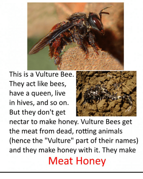 "Animals, Queen, and Live: This is a Vulture Bee.  They act like bees,  have a queen, live  in hives, and so on.  But they don't get  nectar to make honey. Vulture Bees get  the meat from dead, rotting animals  (hence the ""Vulture"" part of their names)  and they make honey with it. They make  Meat Honey"