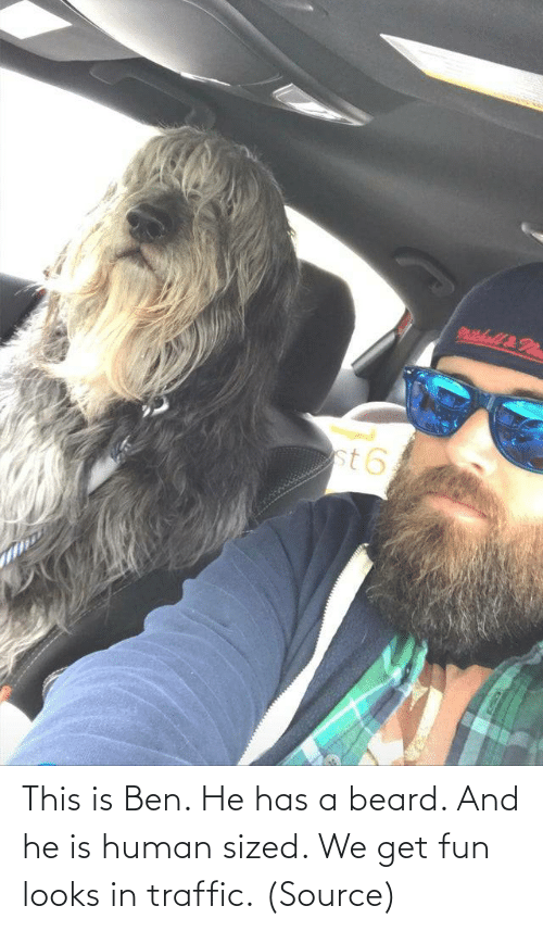 Aww, Beard, and Reddit: This is Ben. He has a beard. And he is human sized. We get fun looks in traffic.(Source)