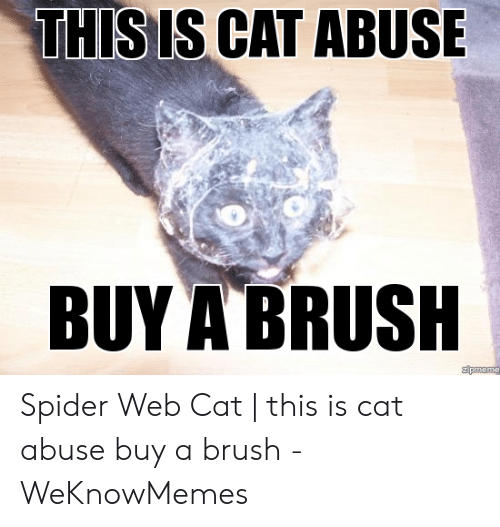 THIS IS CAT ABUSE BUY a BRUSH Spider Web Cat | This Is Cat Abuse Buy