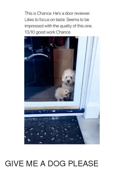Work, Focus, and Good: This is Chance. He's a door reviewer.  Likes to focus on taste. Seems to be  impressed with the quality of this one.  13/10 good work Chance GIVE ME A DOG PLEASE