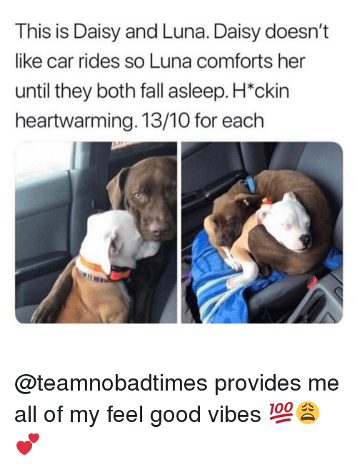 Fall, Memes, and Good: This is Daisy and Luna. Daisy doesn't  like car rides so Luna comforts her  until they both fall asleep. H*ckin  heartwarming. 13/10 for each @teamnobadtimes provides me all of my feel good vibes 💯😩💕