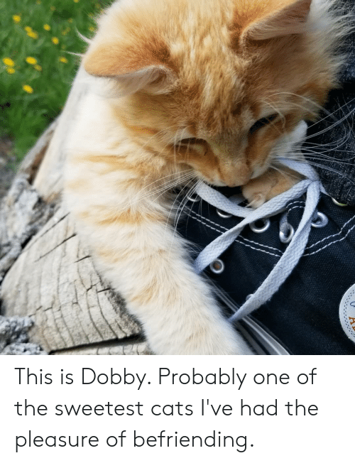Cats, One, and This: This is Dobby. Probably one of the sweetest cats I've had the pleasure of befriending.