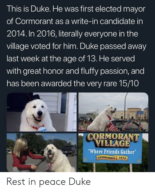 "Friends, Duke, and Peace: This is Duke. He was first elected mayor  of Cormorant as a write-in candidate in  2014. In 2016, literally everyone in the  village voted for him. Duke passed away  last week at the age of 13. He served  with great honor and fluffy passion, and  has been awarded the very rare 15/10  "" CORMORANT  ILLAGE  Where Friends Gather""  ESTABLISHED 1874  el Rest in peace Duke"