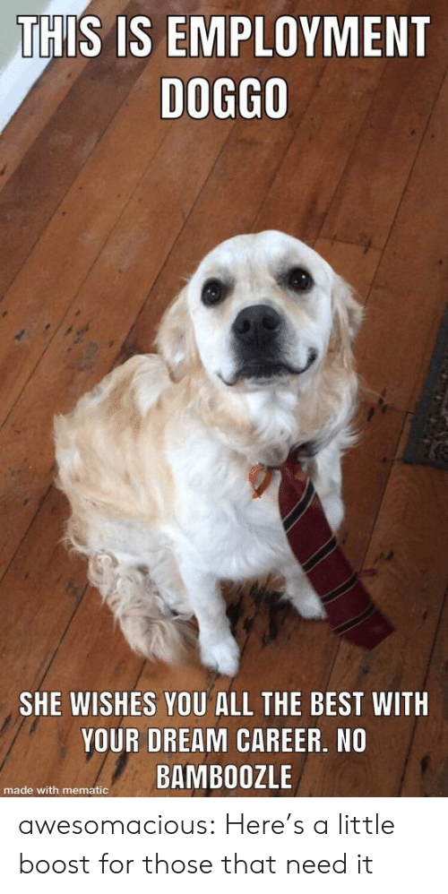 Tumblr, Best, and Blog: THIS IS EMPLOYMENT  DOG8O  SHE WISHES YOU ALL THE BEST WITH  YOUR DREAM CAREER, NO  e with menateBAMBOOZLE awesomacious:  Here's a little boost for those that need it