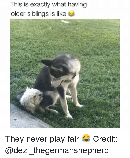 Memes, Never, and 🤖: This is exactly what having  older siblings is like They never play fair 😂 Credit: @dezi_thegermanshepherd