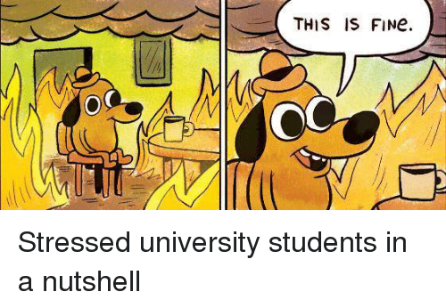 this is fine stressed university students in a nutshell 16583849 this is fine stressed university students in a nutshell dank