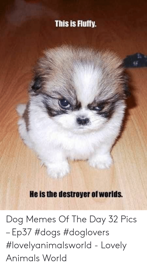 This Is Fluffy He Is the Destroyer of Worlds Dog Memes of ...