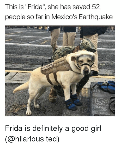 """Definitely, Funny, and Ted: This is """"Frida"""", she has saved 52  people so far in Mexico's Earthquake  MARI Frida is definitely a good girl (@hilarious.ted)"""