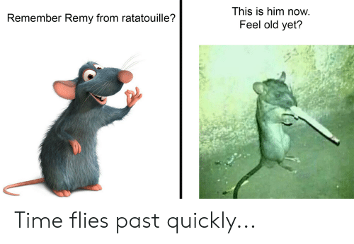 This Is Him Now Remember Remy From Ratatouille Feel Old Yet Time Flies Past Quickly Ratatouille Meme On Me Me