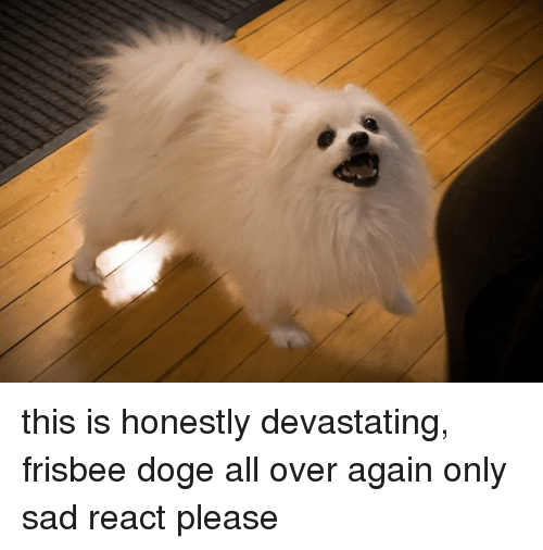 this is honestly devastating frisbee doge all over again only 12540611 ✅ 25 best memes about frisbee doge frisbee doge memes