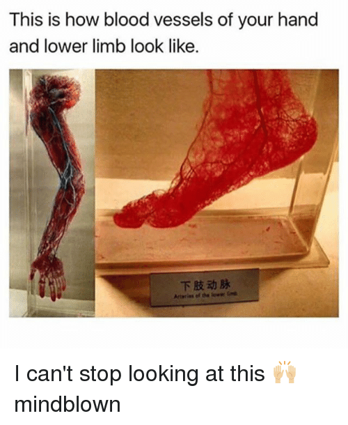 Memes, 🤖, and How: This is how blood vessels of your hand  and lower limb look like.  下肢动脉 I can't stop looking at this 🙌🏼 mindblown