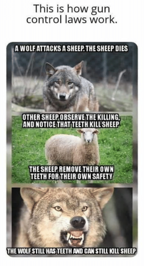 Memes, Control, and Work: This is how gun  control laws work.  A WOLF ATTACKS A SHEEP THE SHEEP DIES  OTHER SHEEPOBSERVE THE KILLING,  AND NOTICE THAT TEETH KILLSHEEP  THE SHEEP REMOVE THEIR OWN  TEETH FOR THEIR OWN SAFETY  THE WOLFSTILL HAS TEETH AND CAN STILL KILLSHEEP