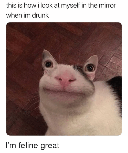 Drunk, Memes, and Mirror: this is how i look at myself in the mirror  when im drunk I'm feline great