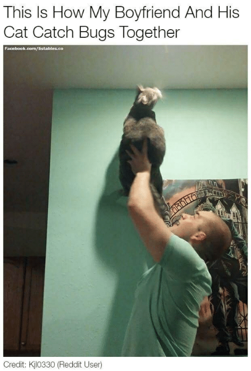 This Is How My Boyfriend and His Cat Catch Bugs Together