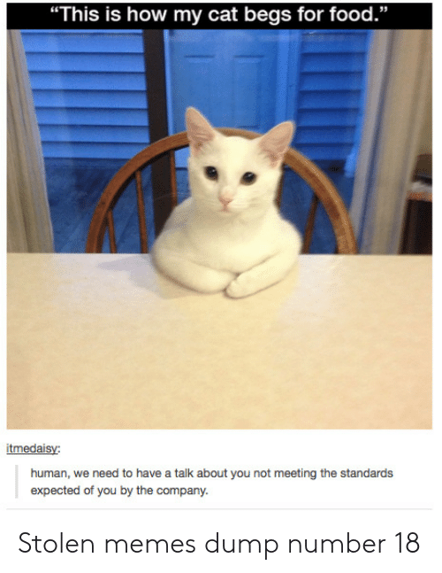 "Food, Memes, and How: ""This is how my cat begs for food.""  itmedaisy:  human, we need to have a talk about you not meeting the standards  expected of you by the company. Stolen memes dump number 18"