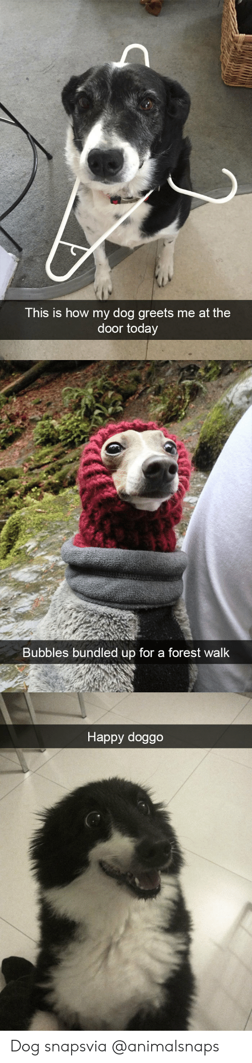 Target, Tumblr, and Happy: This is how my dog greets me at the  door today   Bubbles bundled up for a forest walk   Happy doggo Dog snapsvia @animalsnaps