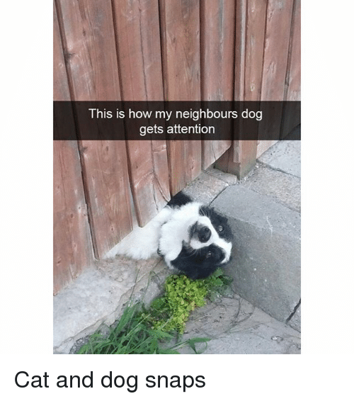 Funny, How, and Dog: This is how my neighbours dog  gets attention Cat and dog snaps