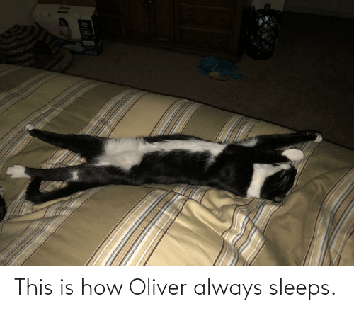 How, This, and This Is: This is how Oliver always sleeps.