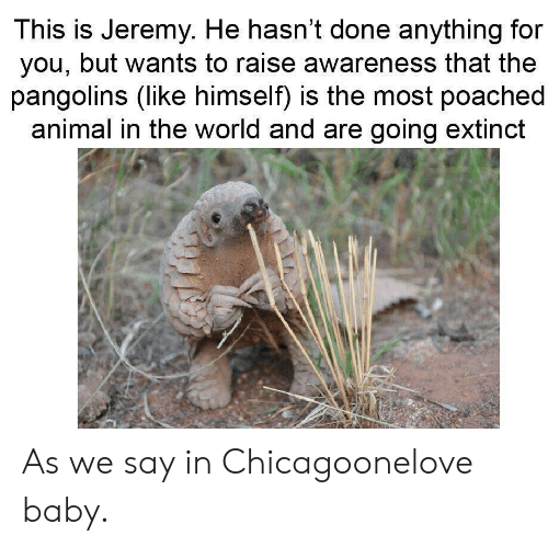 Chicago, Animal, and World: This is Jeremy. He hasn't done anything for  you, but wants to raise awareness that the  pangolins (like himself) is the most poached  animal in the world and are going extinct As we say in Chicagoonelove baby.