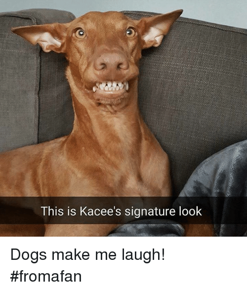 this is kacee s signature look dogs make me laugh fromafan meme