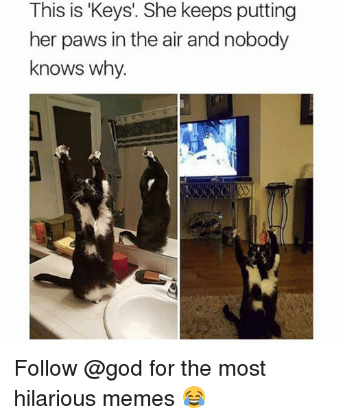 Funny, God, and Memes: This is 'Keys'. She keeps putting  her paws in the air and nobody  knows why.  屓 Follow @god for the most hilarious memes 😂